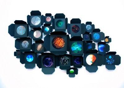 Fenestellas clustered